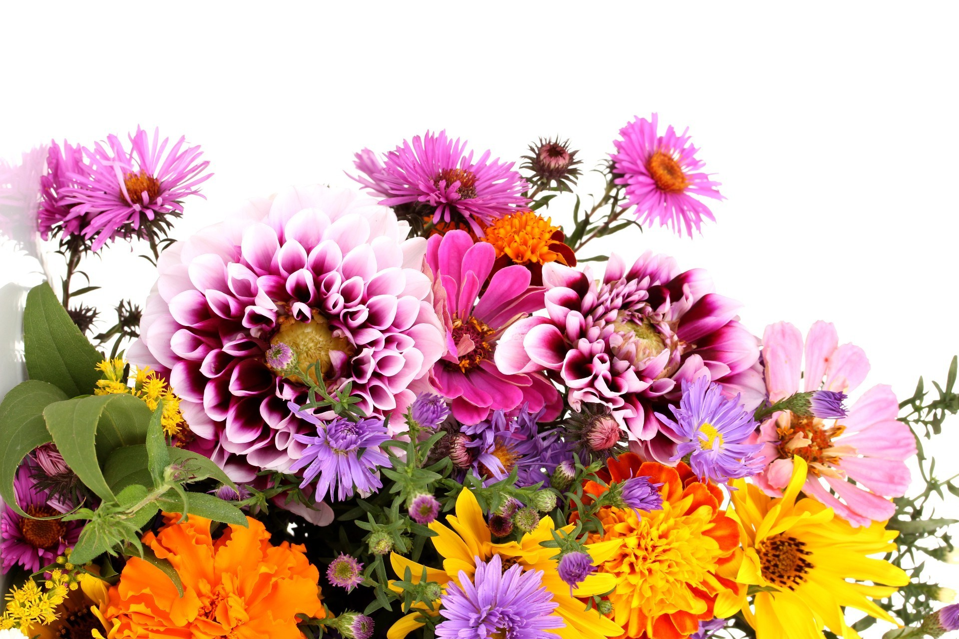 Beautiful Flowers Android Wallpapers For Free