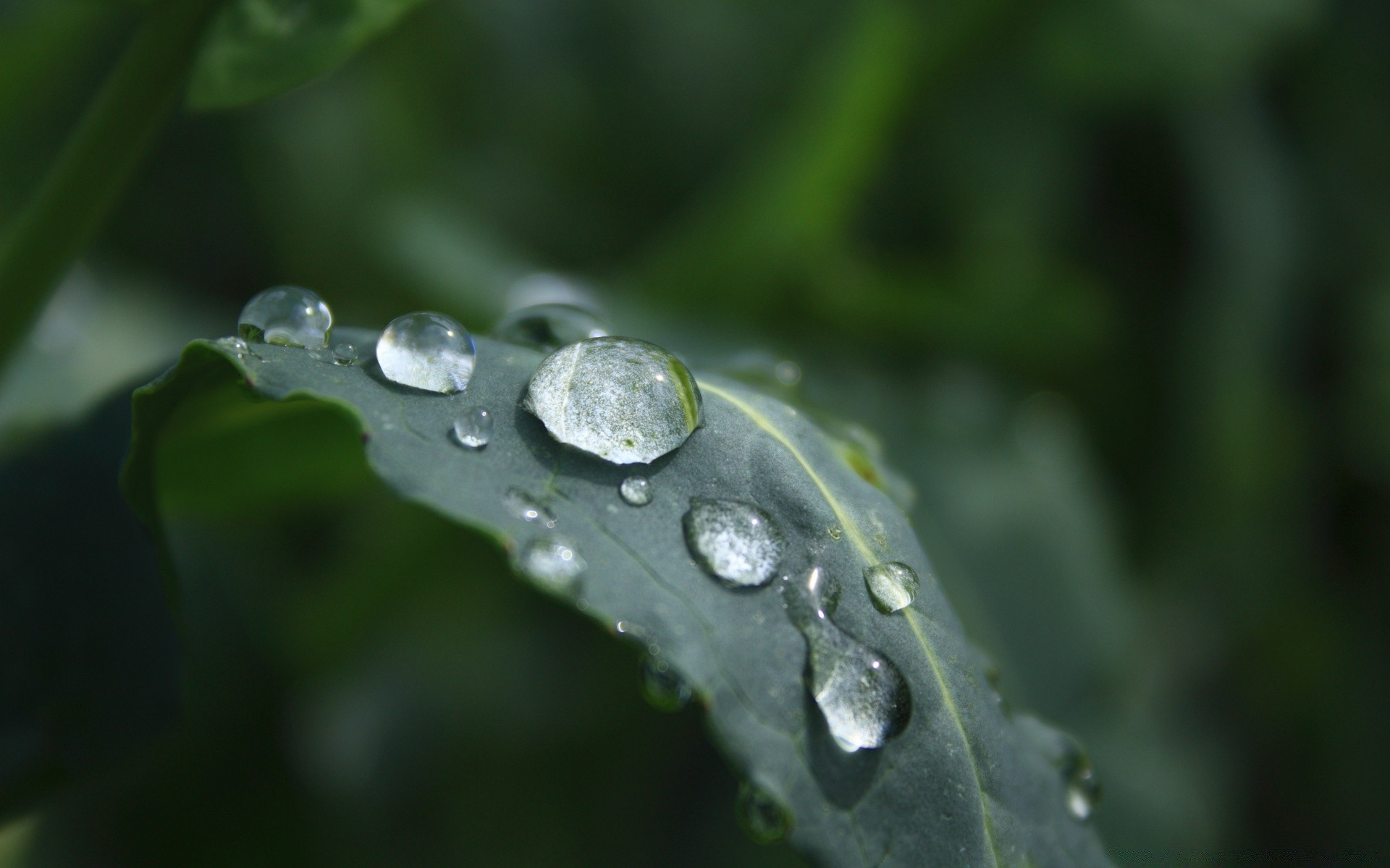 morning dew. android wallpapers for free.