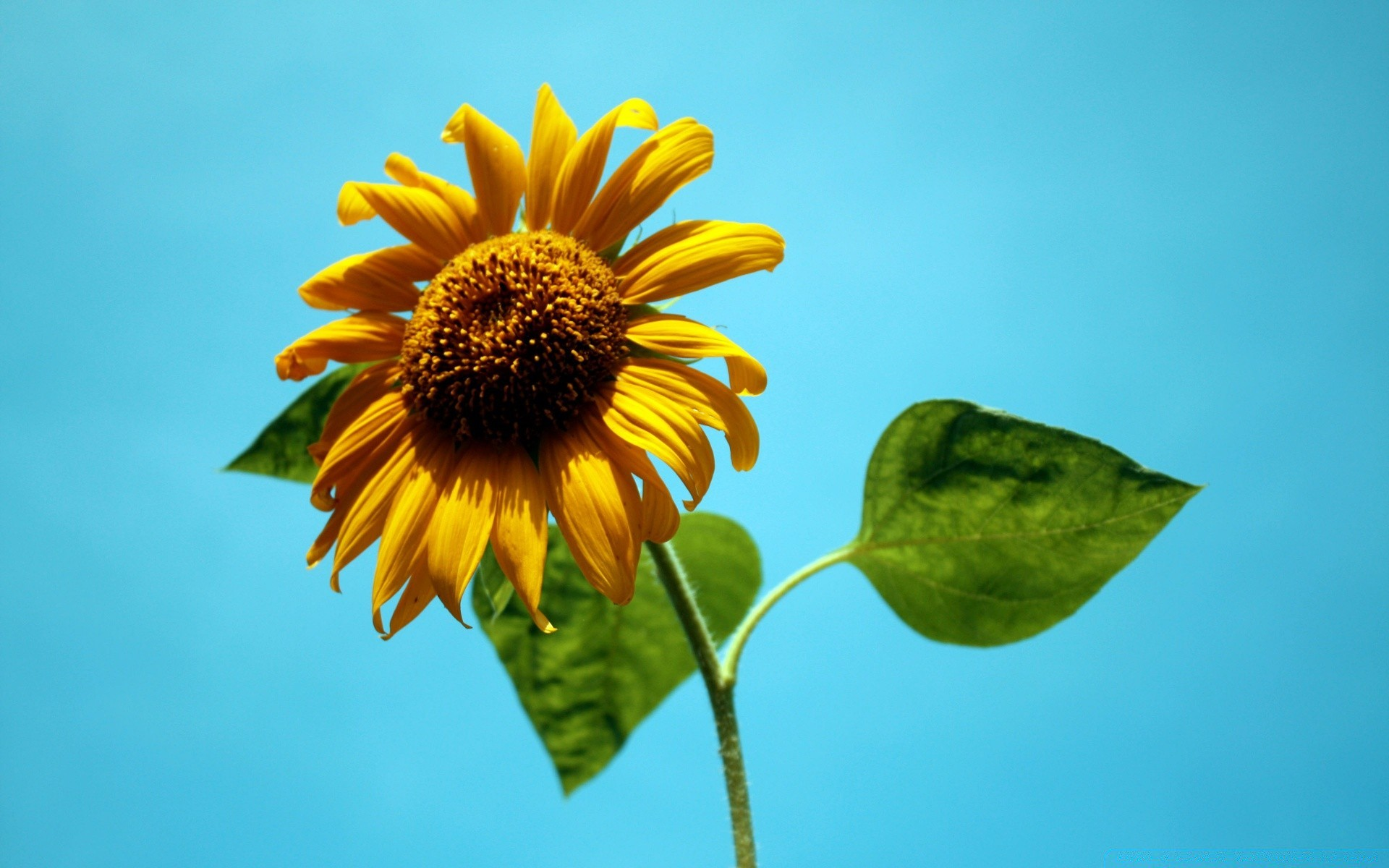 flowers nature flower summer flora outdoors leaf growth fair weather petal bright sunflower
