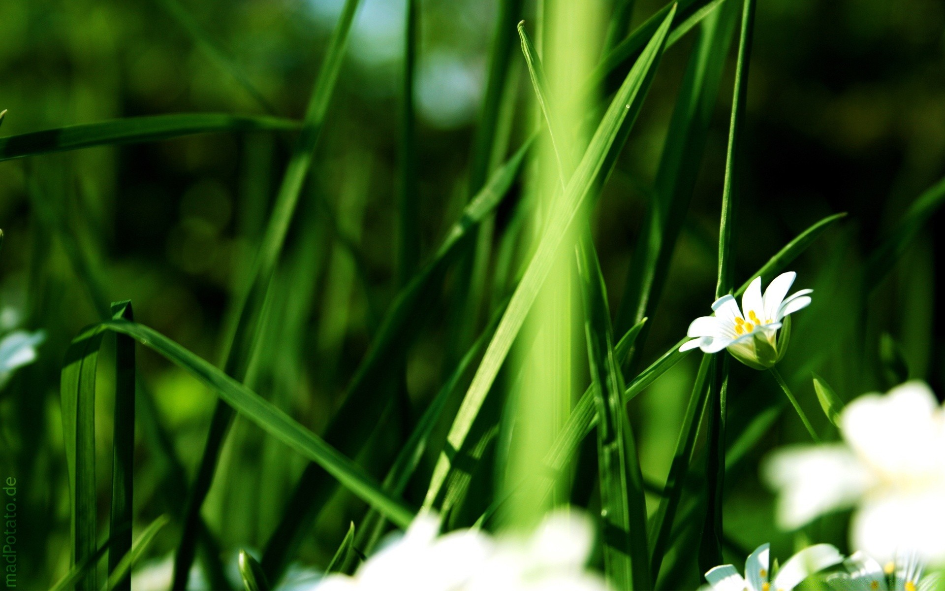 Grass And White Flowers Android Wallpapers For Free