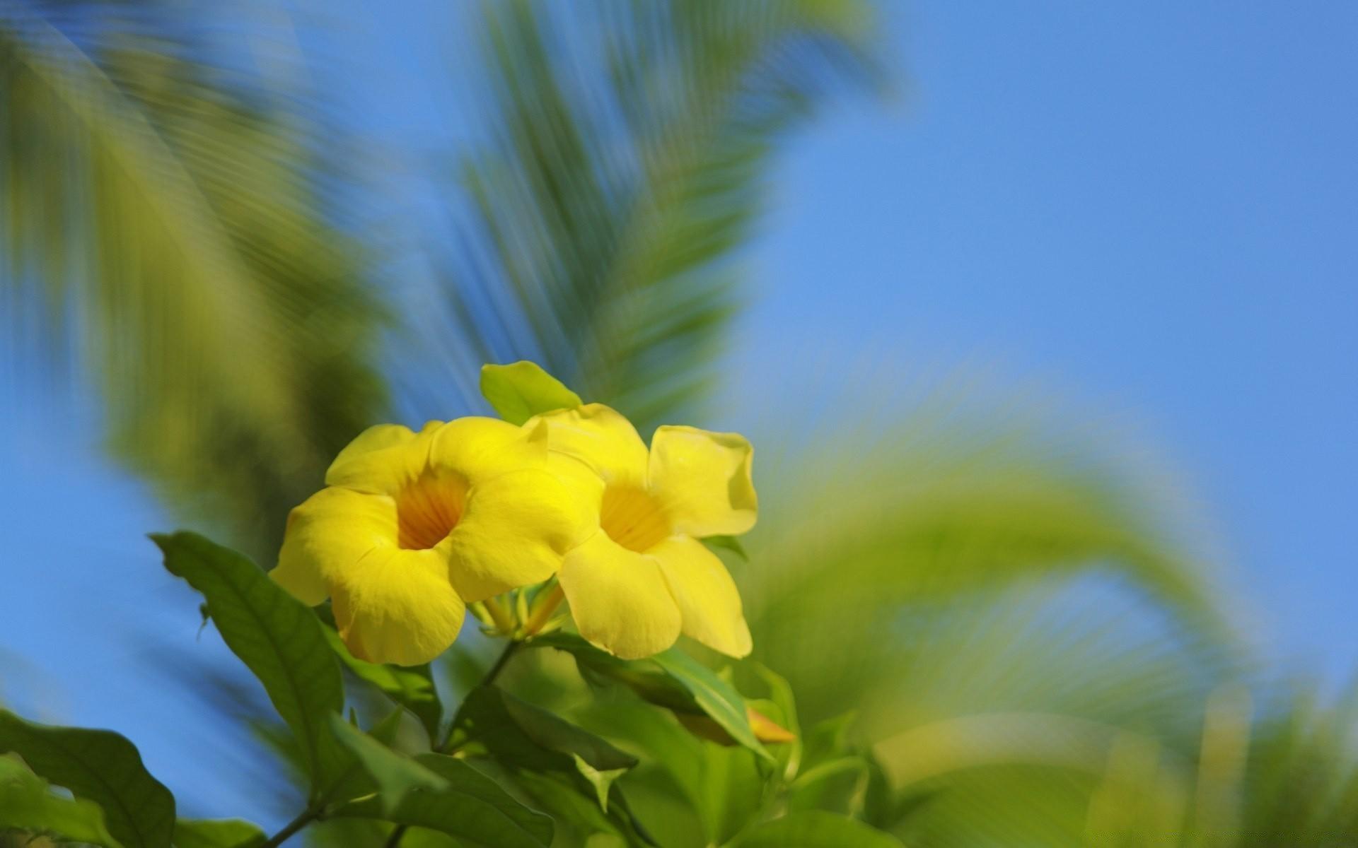 Hawaiian Flowers Android Wallpapers