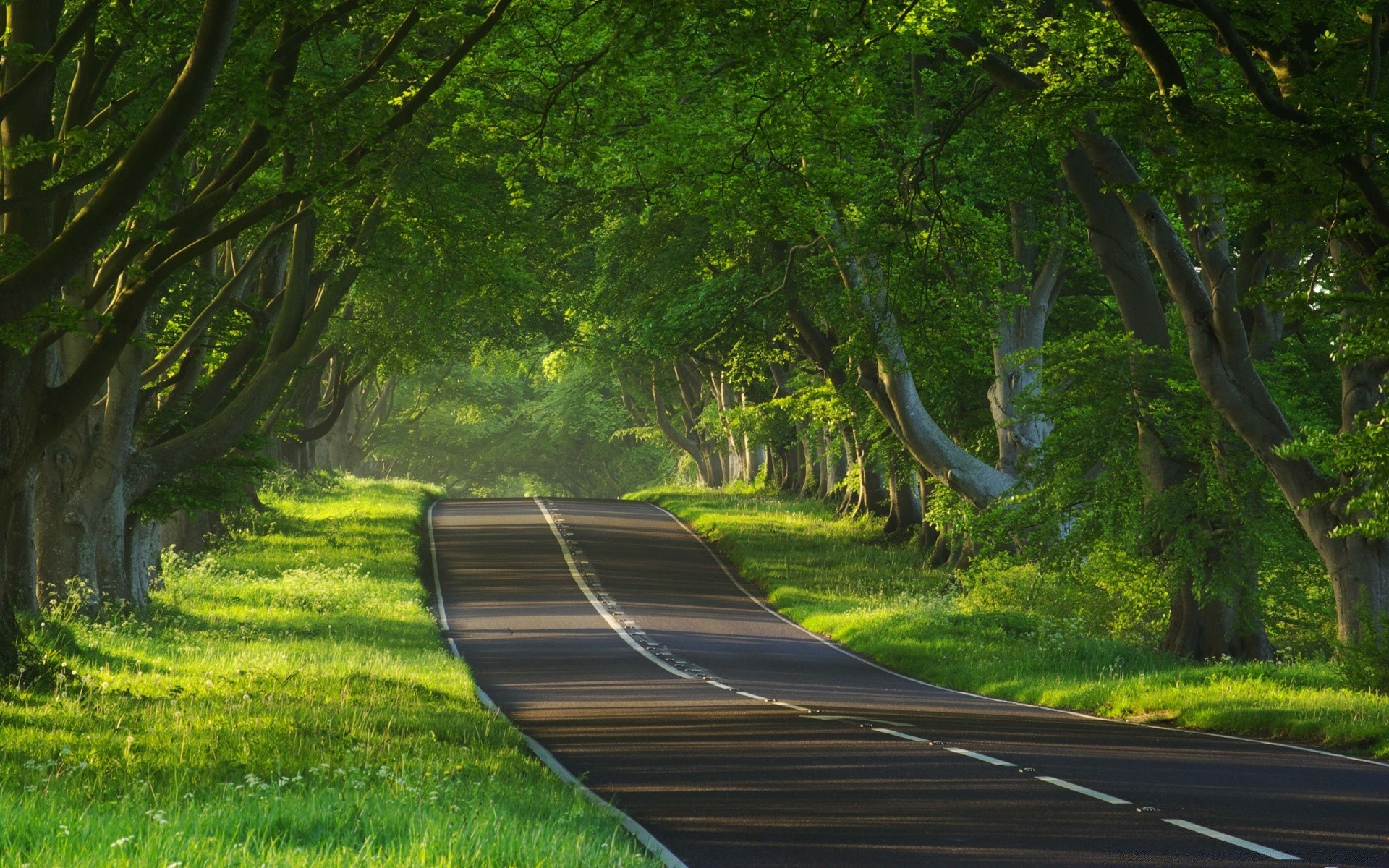 forest road guidance wood tree nature landscape leaf grass lane park summer lush environment dawn scenic rural outdoors country light