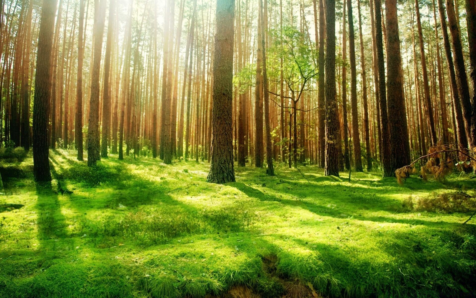фото на фоне леса - 3