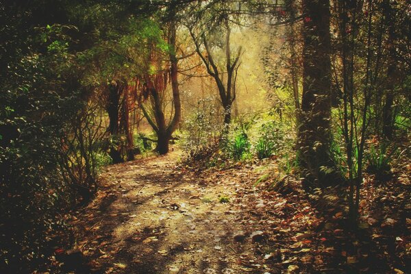 Beautiful Forest Footpath