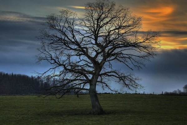 Leafless Tree, HDR