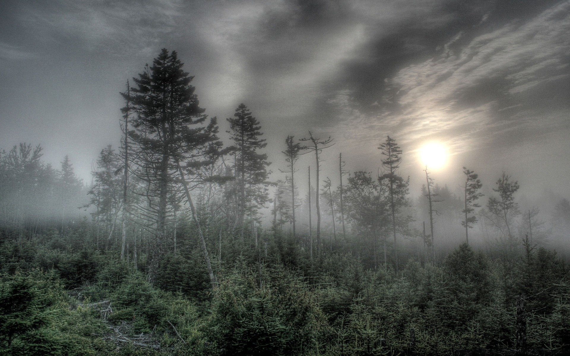 Foggy Forest HDR IPhone Wallpapers For Free