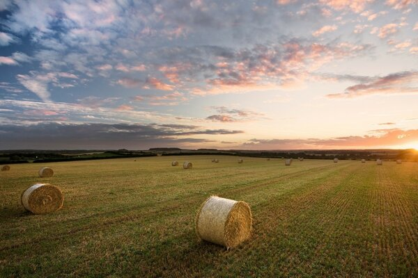 Straw Bales, Sunset