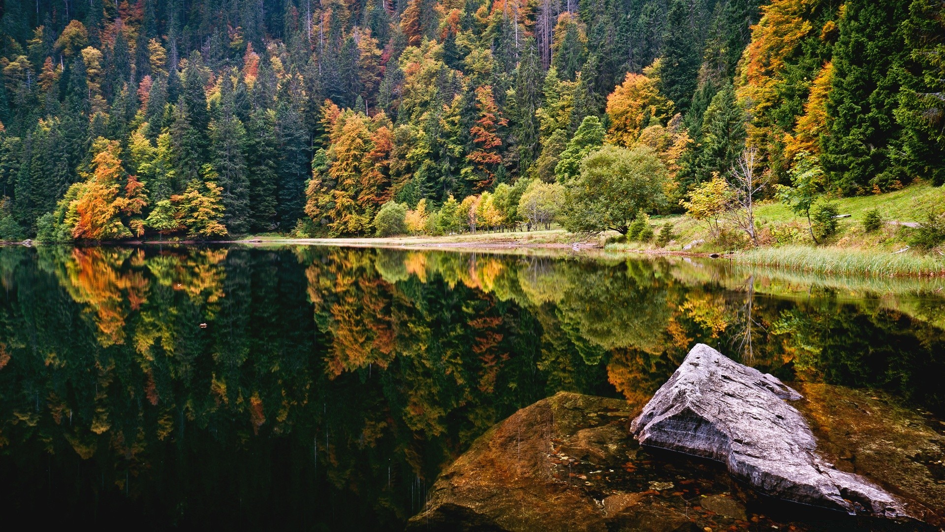Amazing Autumn Lake View Phone Wallpapers