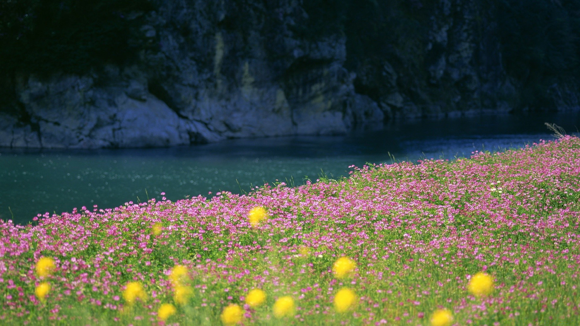 River bank flowers android wallpapers for free mightylinksfo