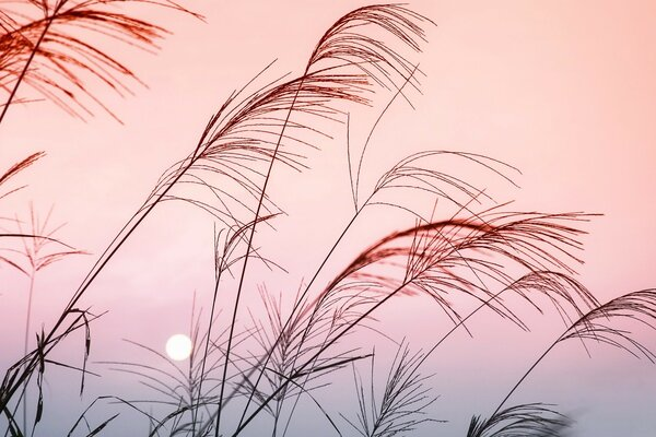 Grass, Sunset