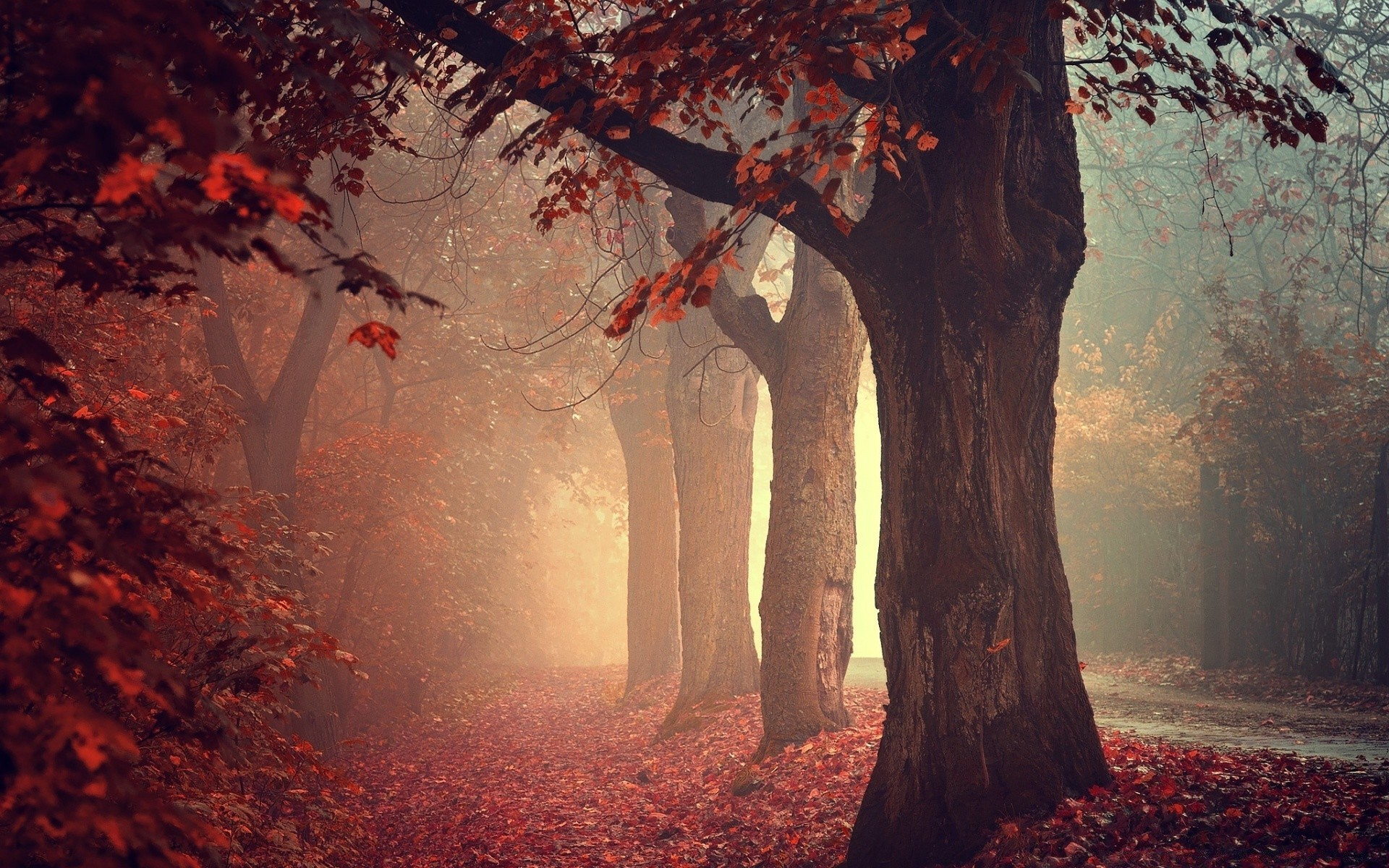 Wallpaper Forest Autumn Pathway HD K Nature