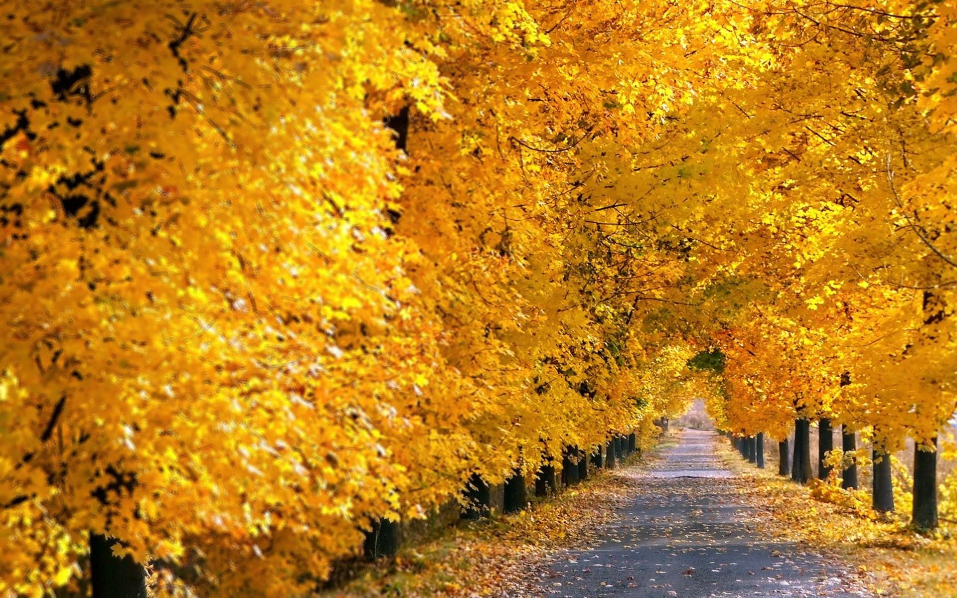 аллея из осенних деревьев бесплатно