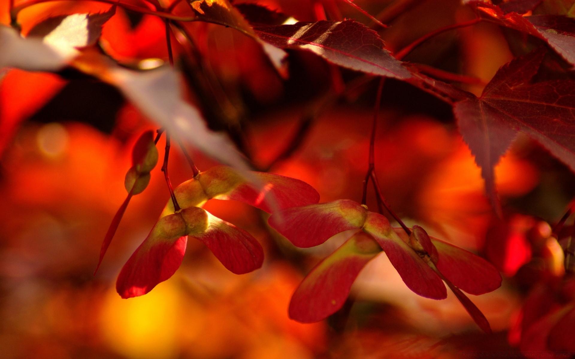 Parkslandscapes Orange Forest Leaves Mother Nature Smart Phone rh