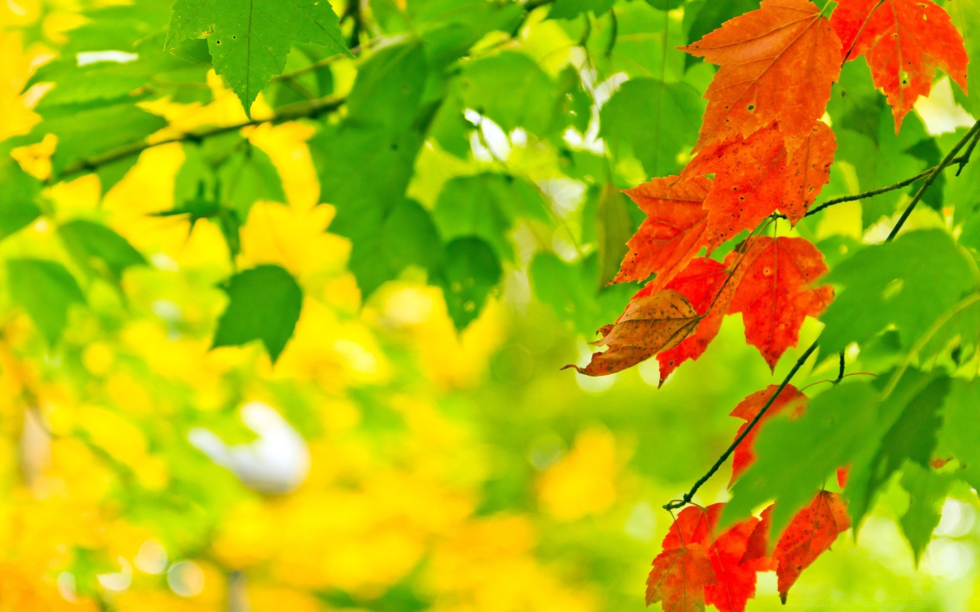 Colorful Leaves Android Wallpapers For Free
