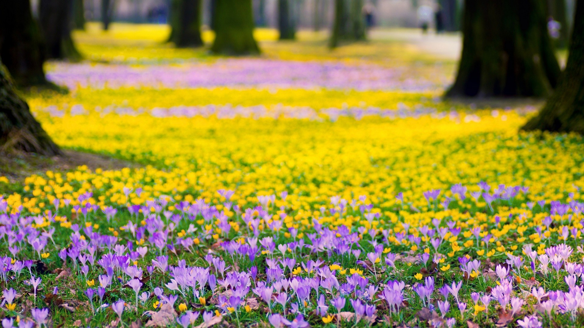 Spring flowers meadow android wallpapers for free mightylinksfo