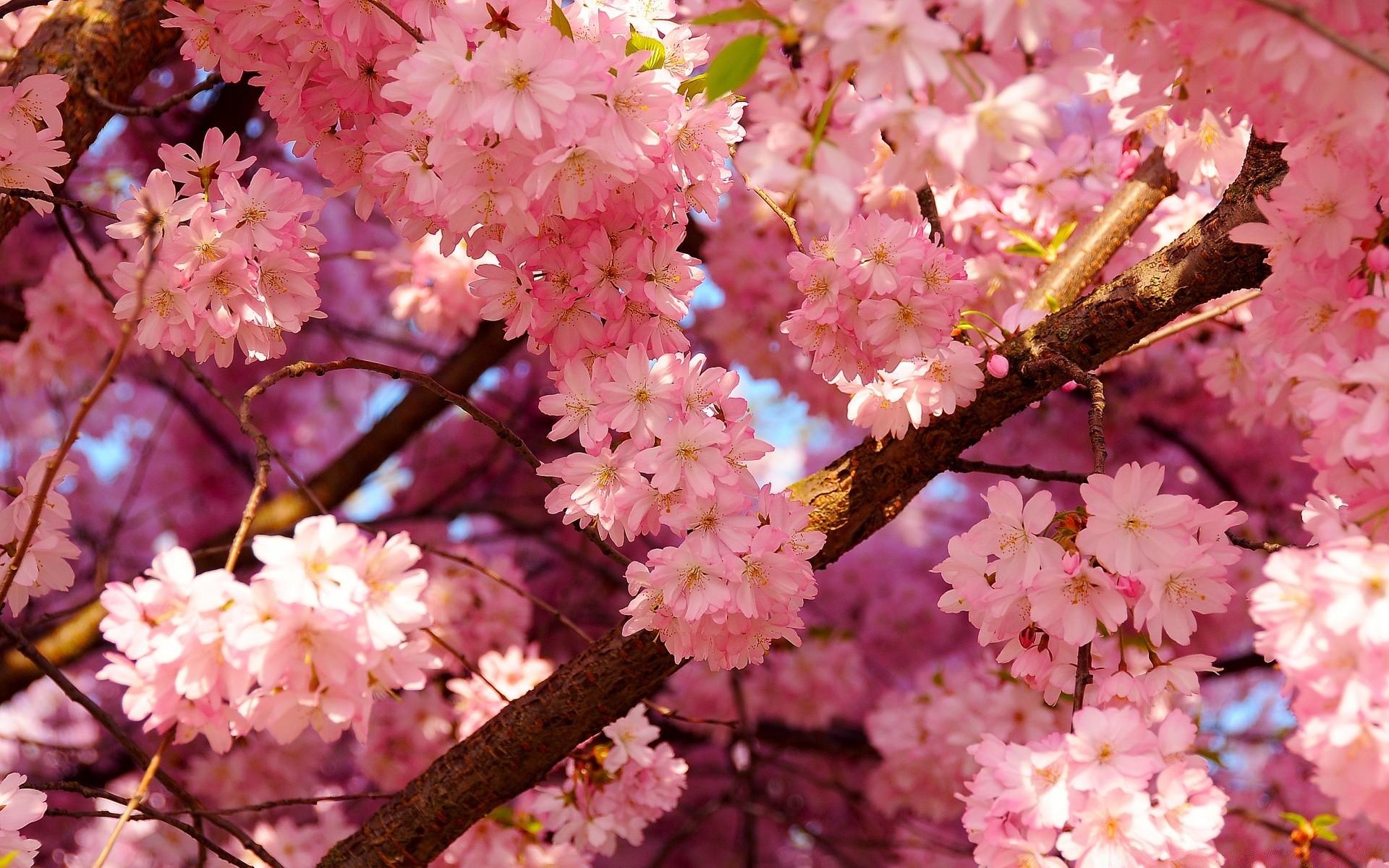 April flower — pic 6