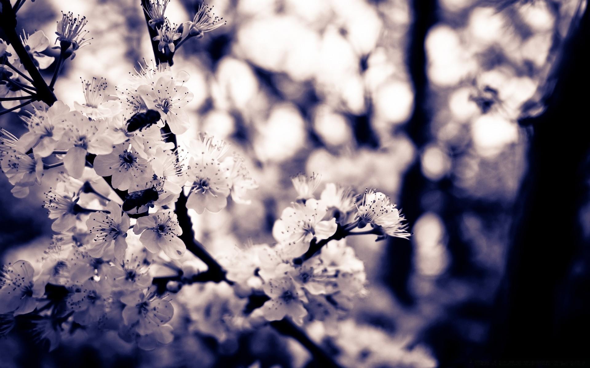 Spring Flower Tree Branch Nature Season Cherry Flora Leaf Color