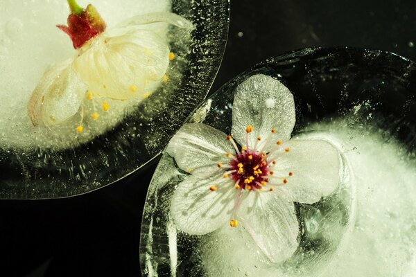 Flowers Trapped In Ice