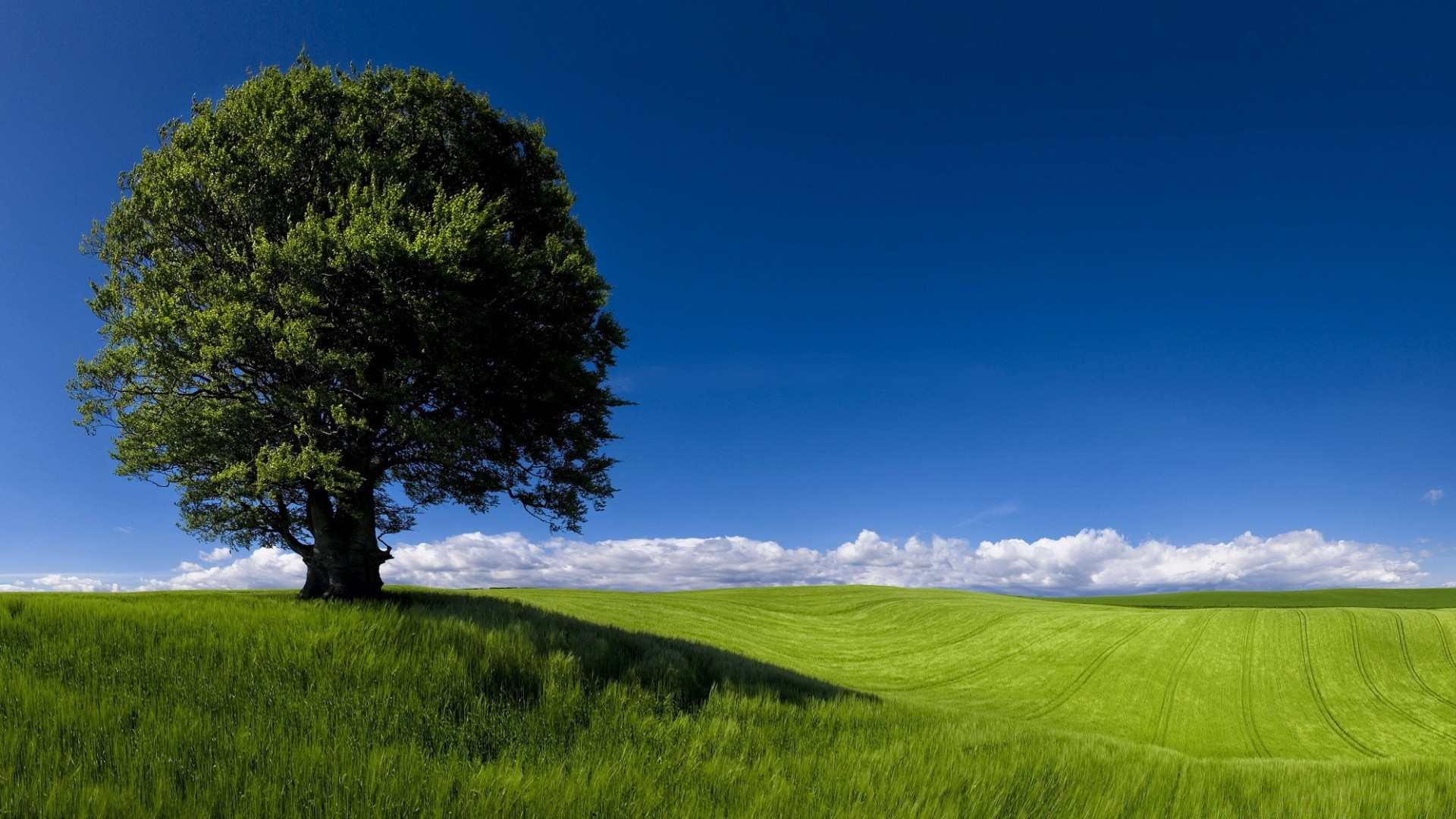 summer landscape nature. android wallpapers for free.