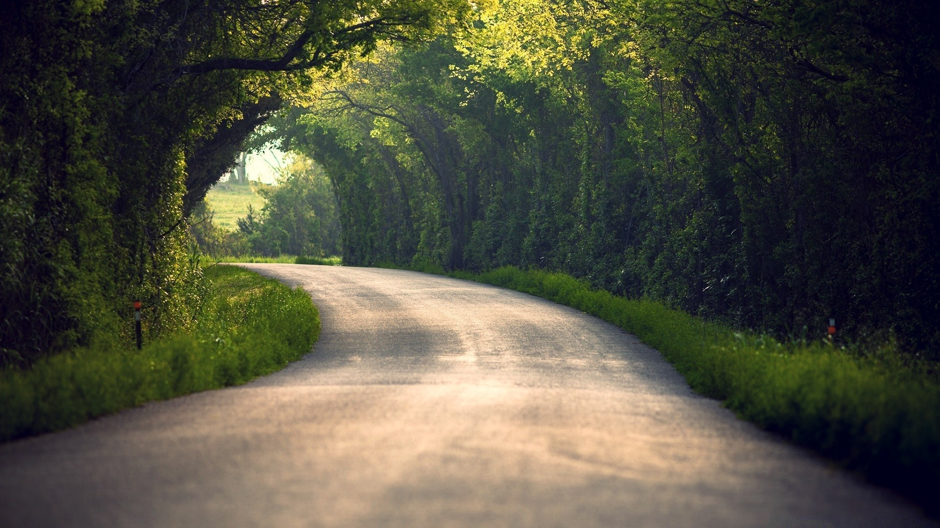 summer road tree landscape guidance wood nature dawn outdoors park countryside scenic travel fog grass