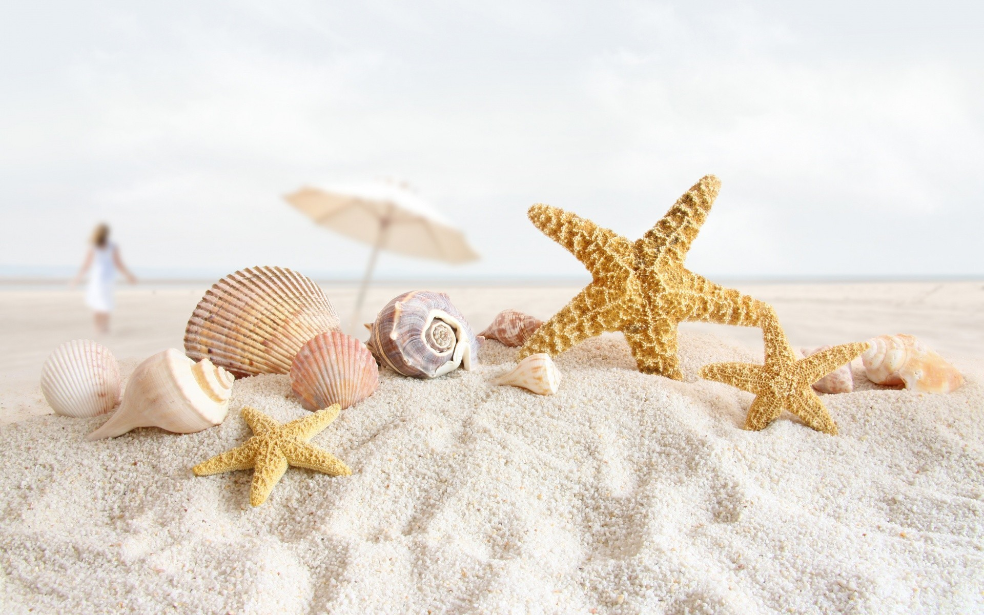 Seashells And Starfish On The Beach - Phone wallpapers