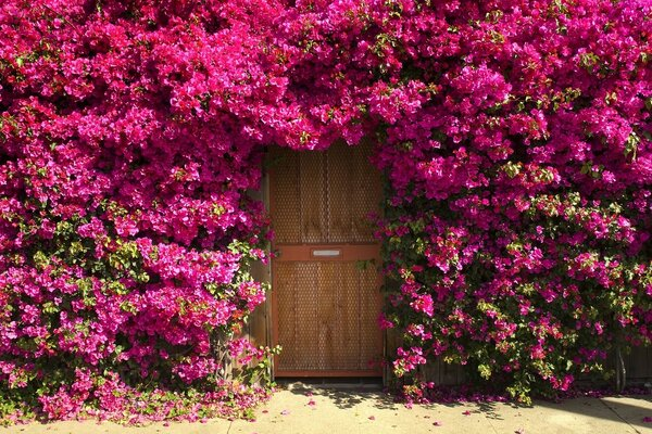 Fragrant Doorway