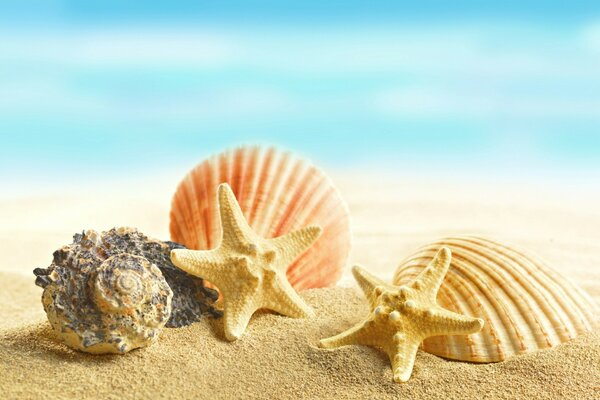 Seashells and Stars