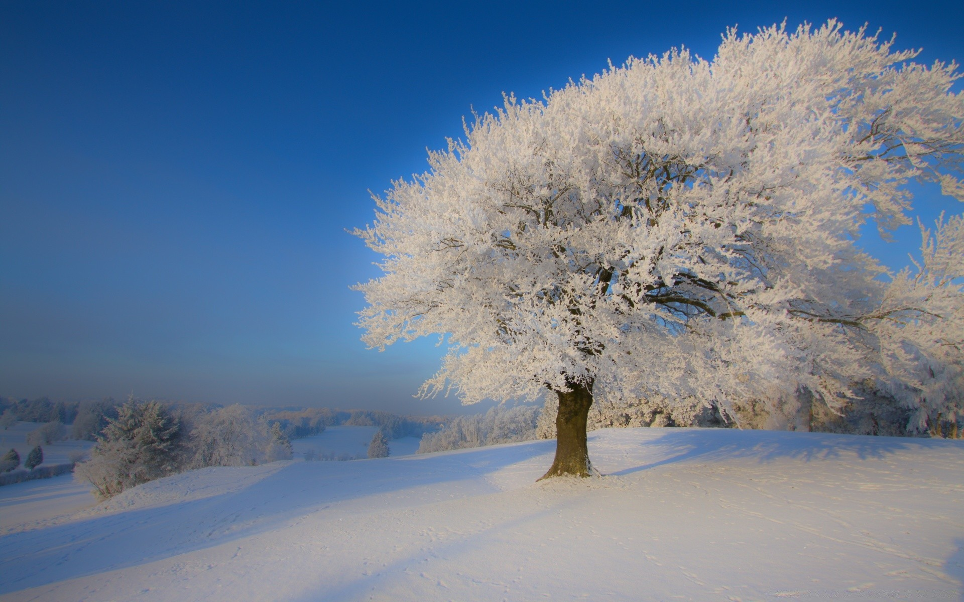 Beautiful Winter Landscape - Phone wallpapers