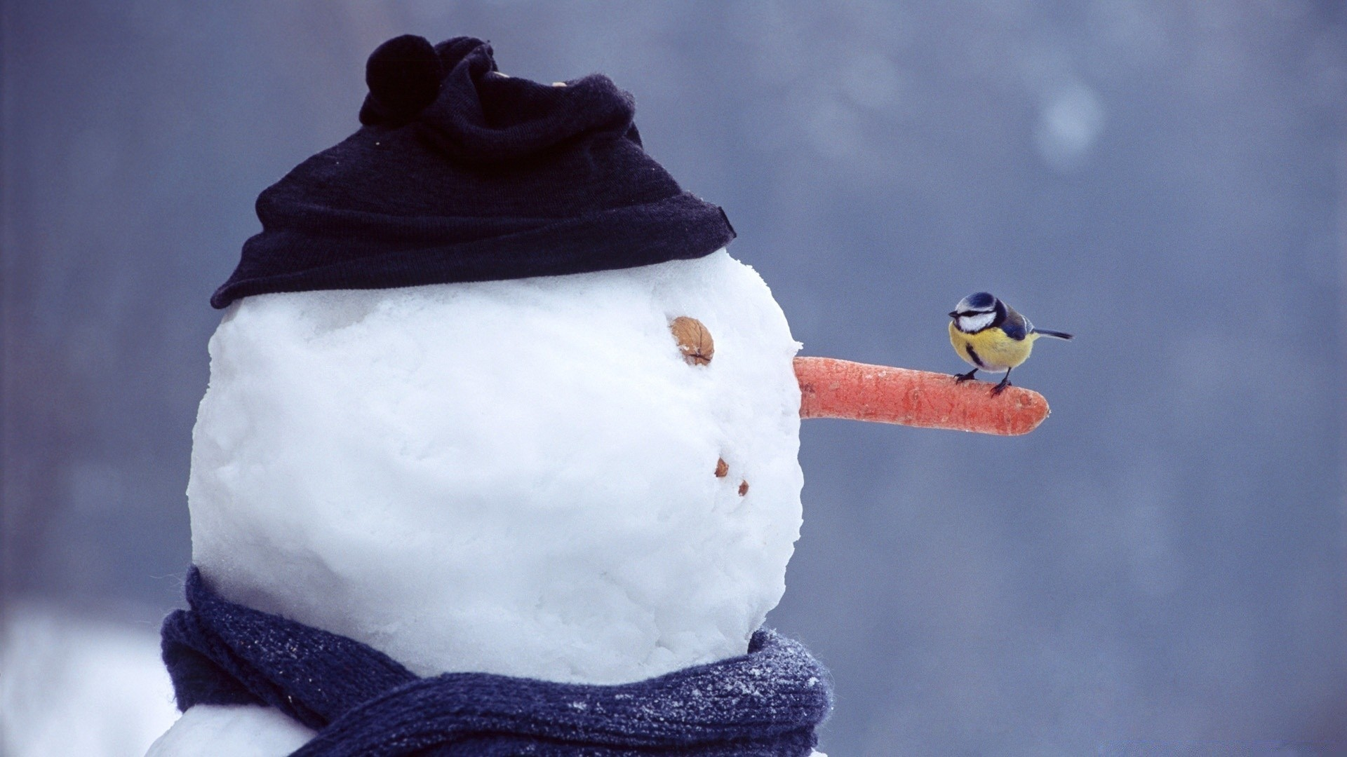 funny snowman. desktop wallpapers for free.