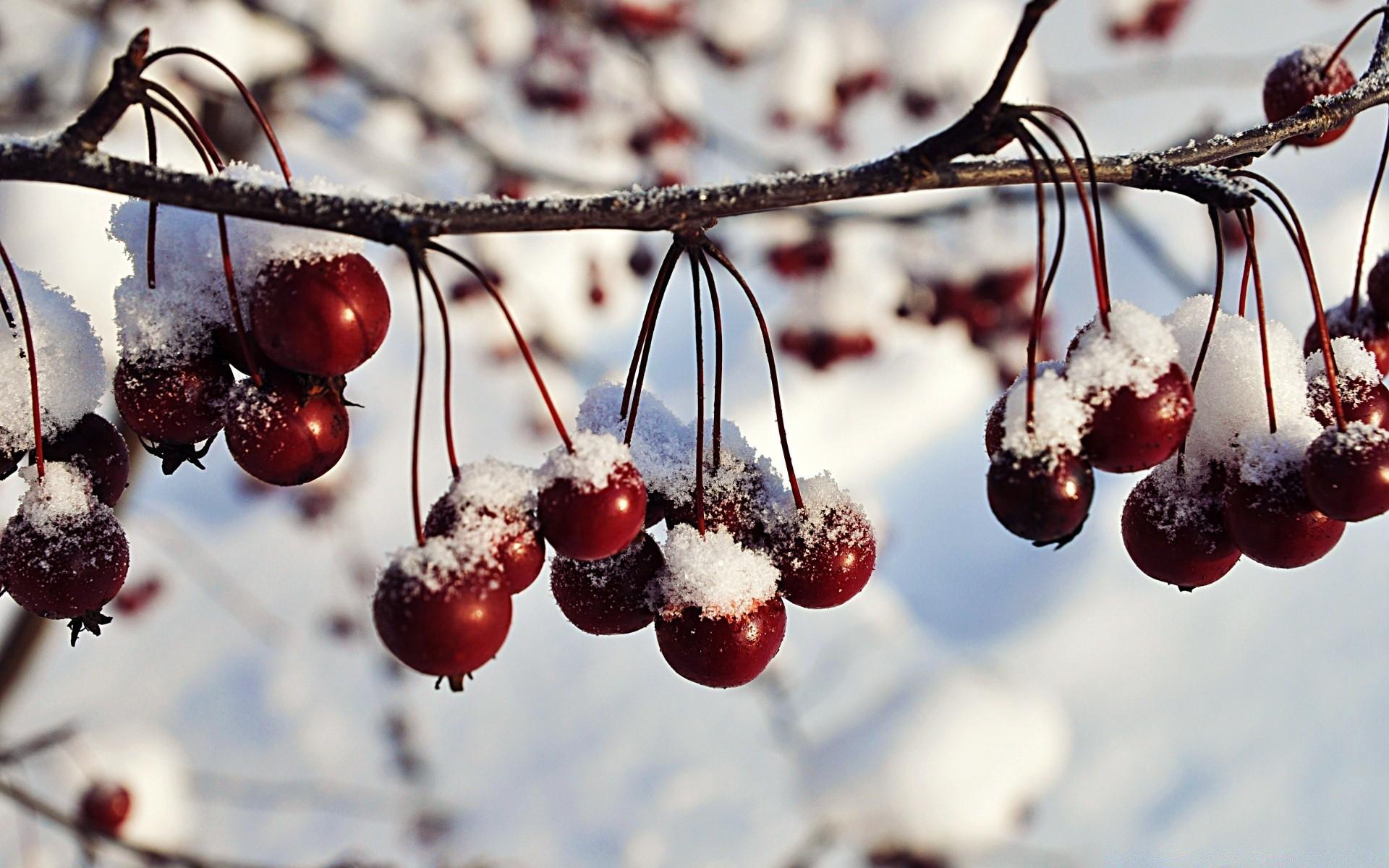 Frozen Red Berries, Winter - Phone
