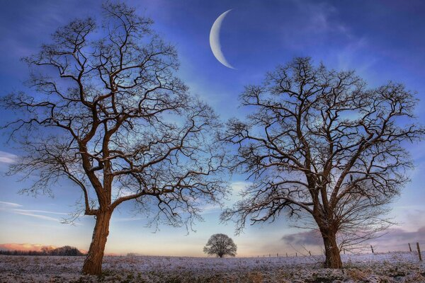 Trees Under New Moon, Winter