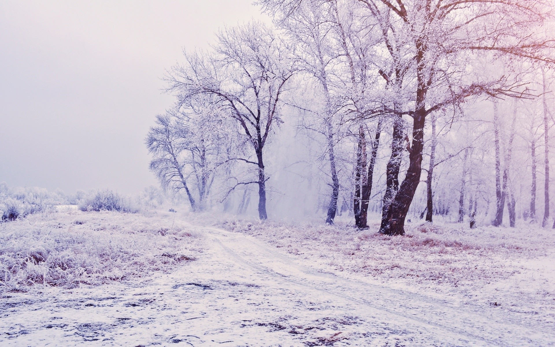 Beautiful Snowy Forest Scenery Android Wallpapers For Free