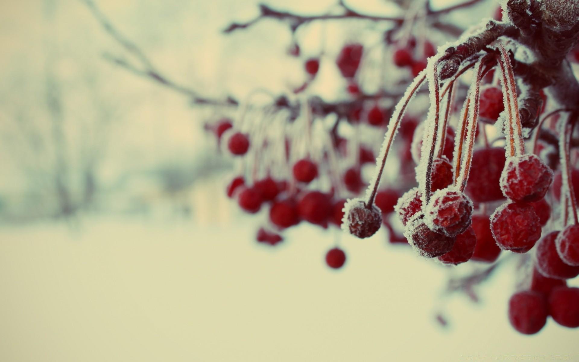 Frozen Berries Macro - Android wallpapers