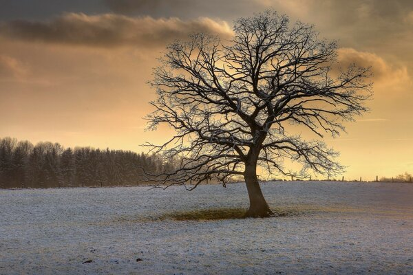Solitary Tree, Winter