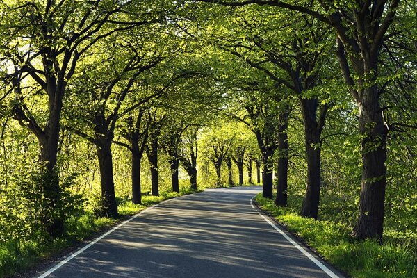 Road Among Trees