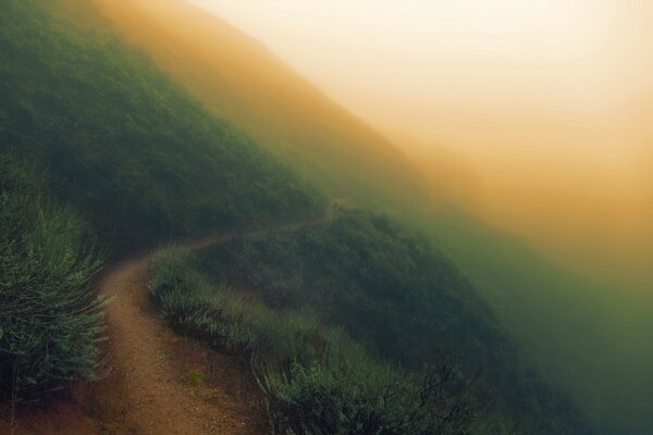 Sunol Regional Wilderness - Foggy Day