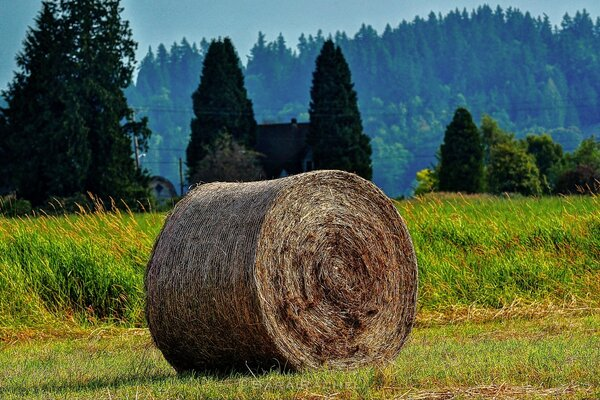 Rolled Bales