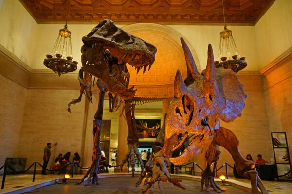 Los Angeles, Natural History Museum