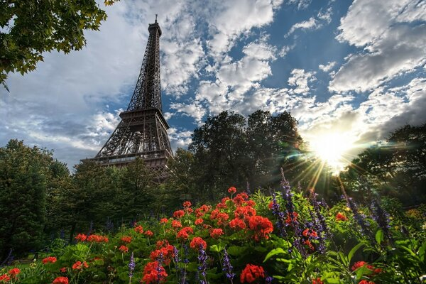 Park View Of Eiffel Tower