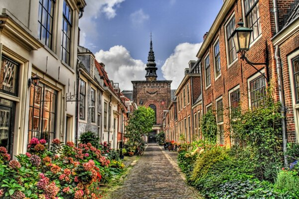 Street In Holland