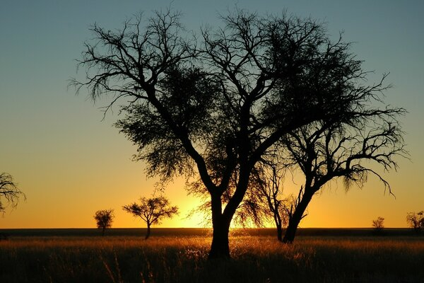 Trees In Open Field, Sunset