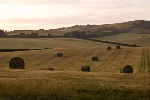 Hay Bales, Isle Of Wight, England