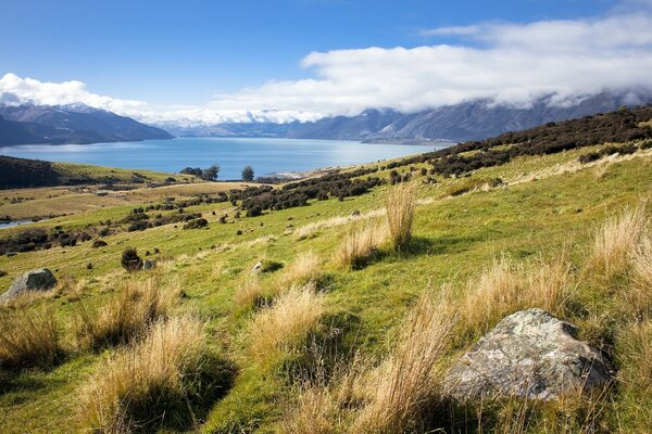 Landscape In New Zealand